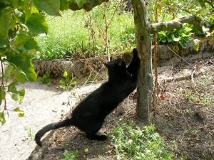 Vivement que je puisse remettre mes miches dewwoorr!!!!!!!!!! dans amour de chat sany0008-300x225